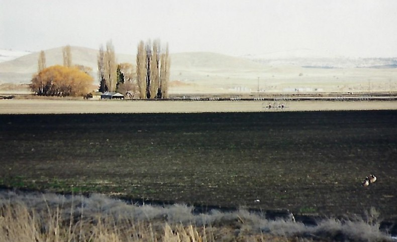 Waterfowl Hunters Dream on 7 Acres