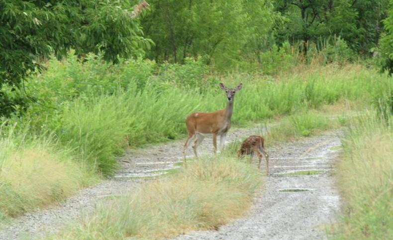 Blue Creek Hunting Retreat