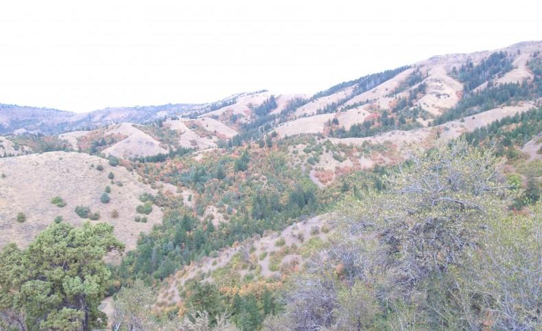 Marsh Creek Grazing