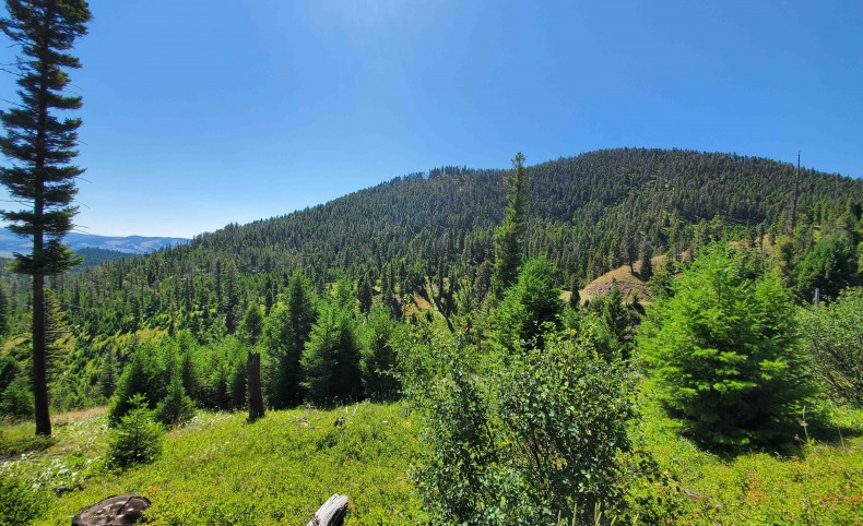 Western Montana  Mtn Land 160 Acres Hunt/Ride