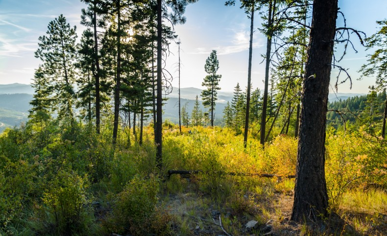 Mountaintop Retreat - Tract 3 - 20.4 acres