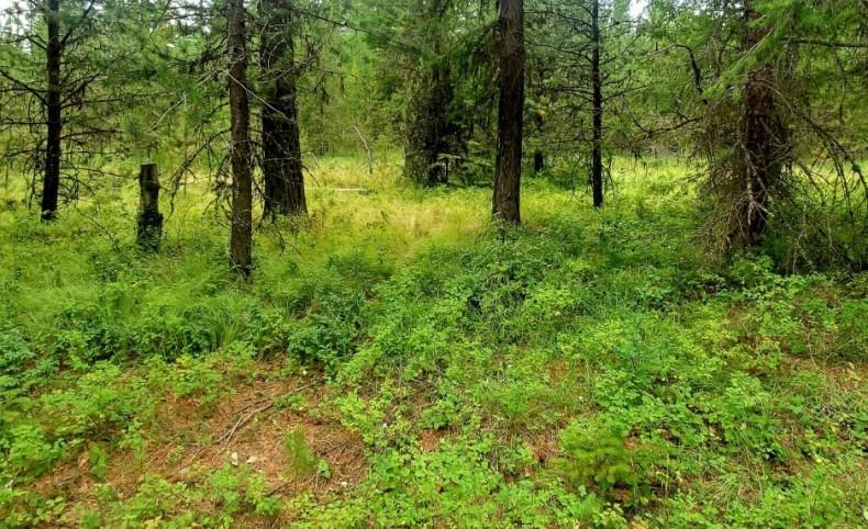 Level surveyed 1.57 acres near Diamond Lake